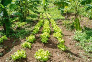 Mandato do Betão incentiva a compra de produtos das cooperativas e dos assentamentos da Zona da Mata