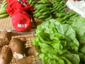 Doações do MST na Zona da Mata reforçam a necessidade de ajuda e doação durante a pandemia